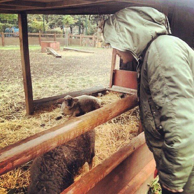 Paul investigates some sheep