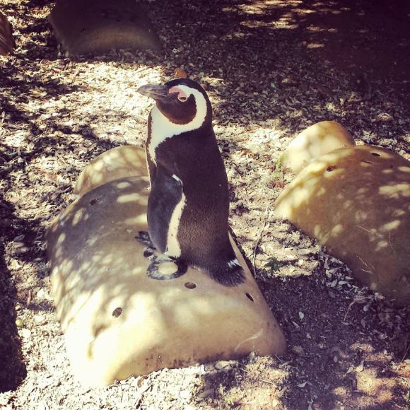 Wish I could adopt a penguin