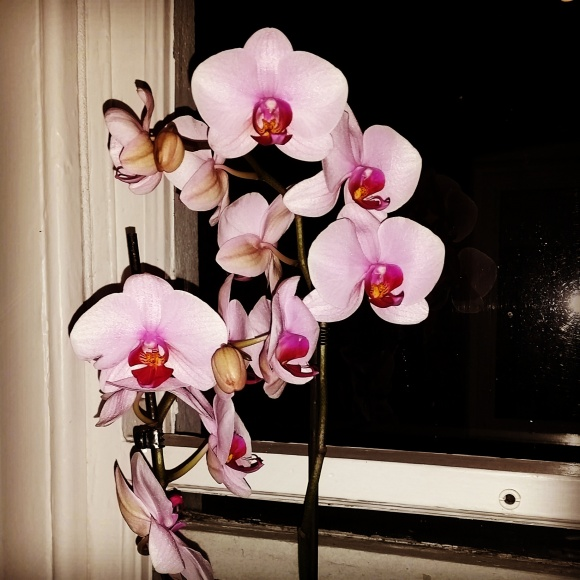 And this amazing orchid from Carrie and Tal that I am DESPERATELY hoping not to kill